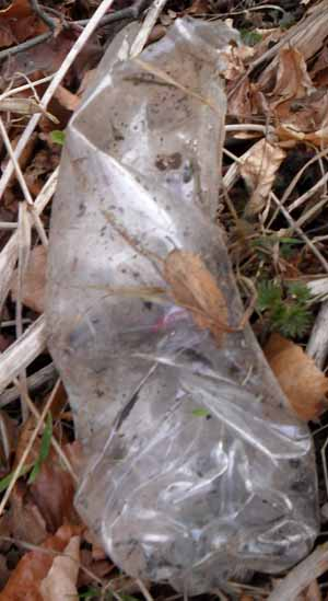 A crushed empty, degraded plastic bottle